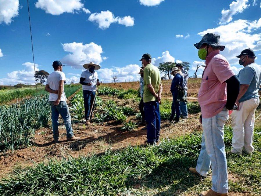 Hortaliças despontam como negócio lucrativo em Dores do Indaiá