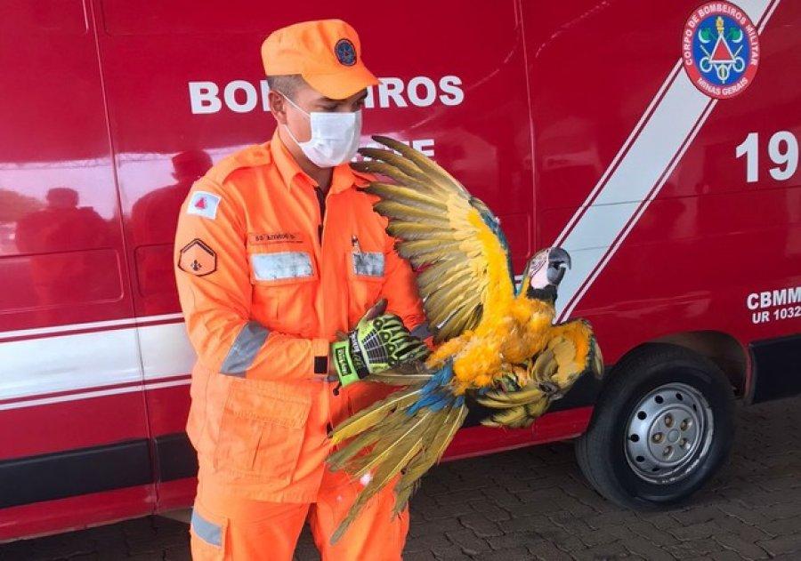 Animais silvestres são resgatados com ferimentos na zona urbana de Patos de Minas