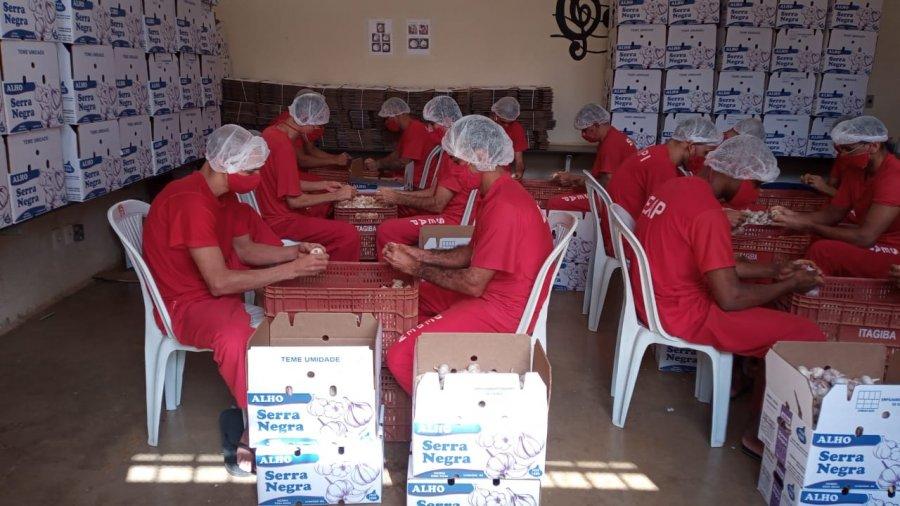 Quinze detentos da Penitenciária de Patrocínio trabalham em oficina de beneficiamento de alho