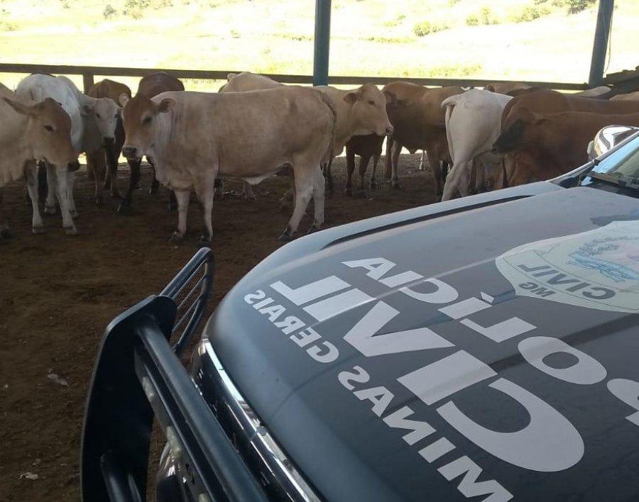 Polícia Civil recupera cabeças de gado em Patos de Minas