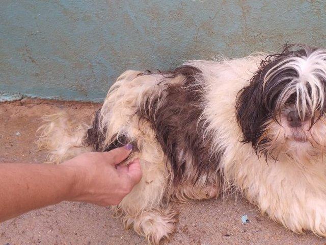 Vigilância Ambiental de Patos de Minas resgata 20 cães vítimas de maus tratos
