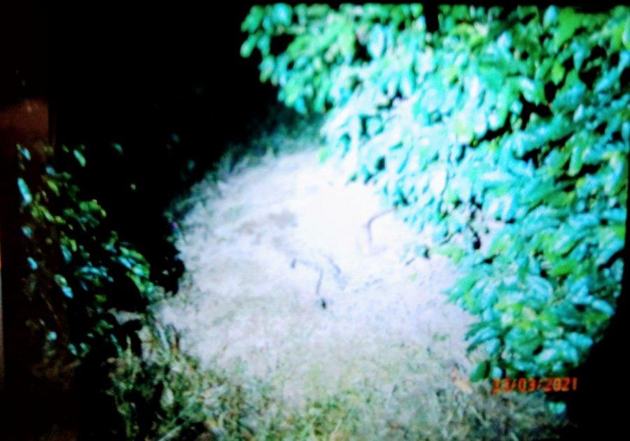 Corpo de jovem desaparecido em Patrocínio é encontrado enterrado em cafezal