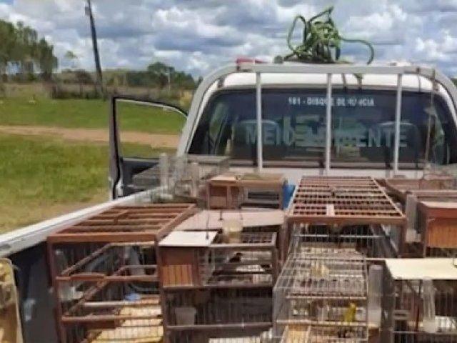 Lagamar: Idoso é multado em mais de R$ 76 mil por manter pássaros da fauna em cativeiro