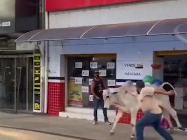 Boi invade loja e foge pelo Centro de Araxá